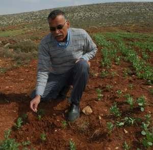 Un poblador de Qusra mostrando los olivos arrancados por los colonos de Shilo