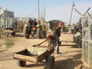 Campesinos de Jayyous pasando por el checkpoint. Sus tierras quedaron del otro lado de la barrera y sólo pueden acceder a ellas algunas horas por día.