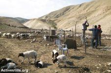 Construyendo un refugio improvisado para los animales en Karzalya, Valle del Jordán. 11/2/16.