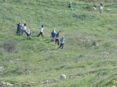 Colonos de Yitzhar bajando hacia tierras palestinas de Asira Al-Qibliya. (M.Landi 2013).
