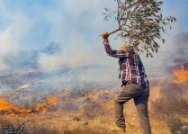 Olivar prendido fuego como consecuencia del gas lacrimógeno disparado por los soldados para reprimir una protesta en Burqah (12/10/20, foto de la alcaldía).